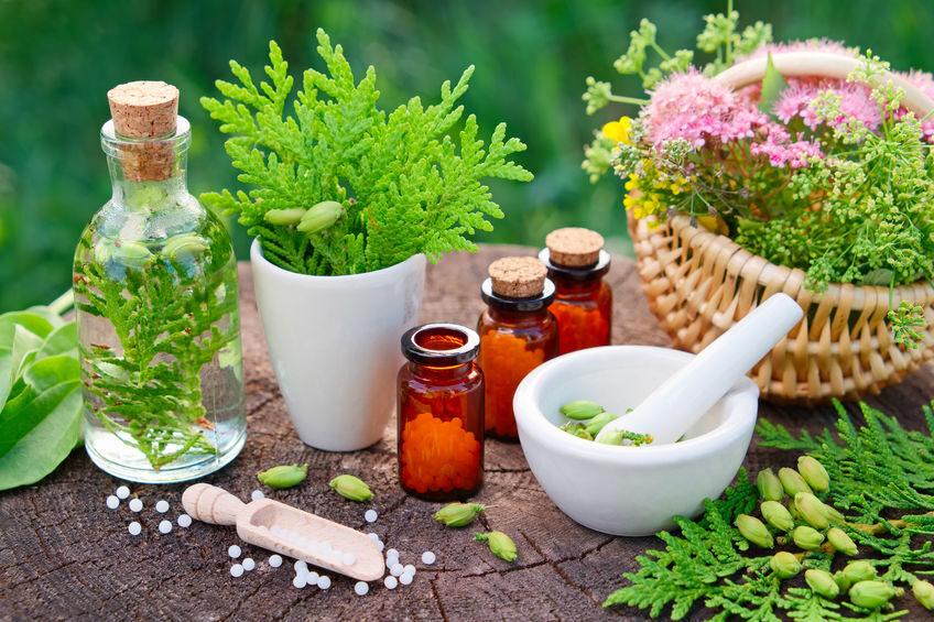 plante medicile.jpe